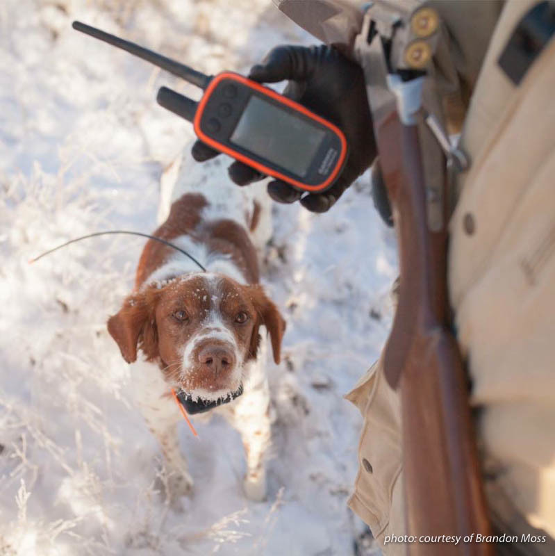 GPS device and Brittany spaniel dog upland hunting in snow in Montana.