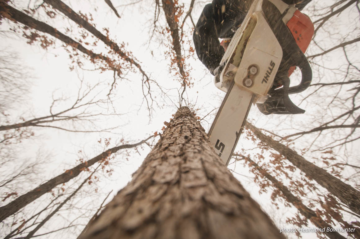 Chainsaw cuts into a tree in the woods during winter.