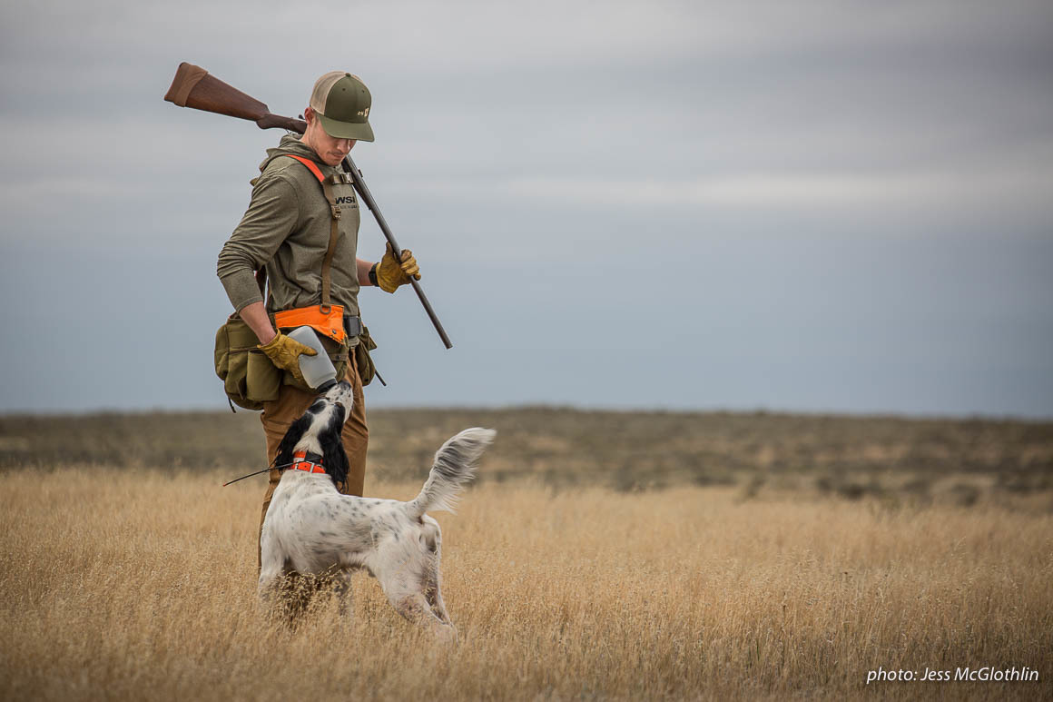 Nick Larson pauses while upland bird hunting in eastern Montana to give his English setter Hartley a much-needed drink of water.