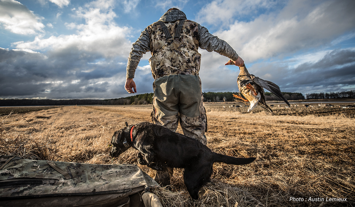 Man hunting waterfowl with black lab at his side in field.