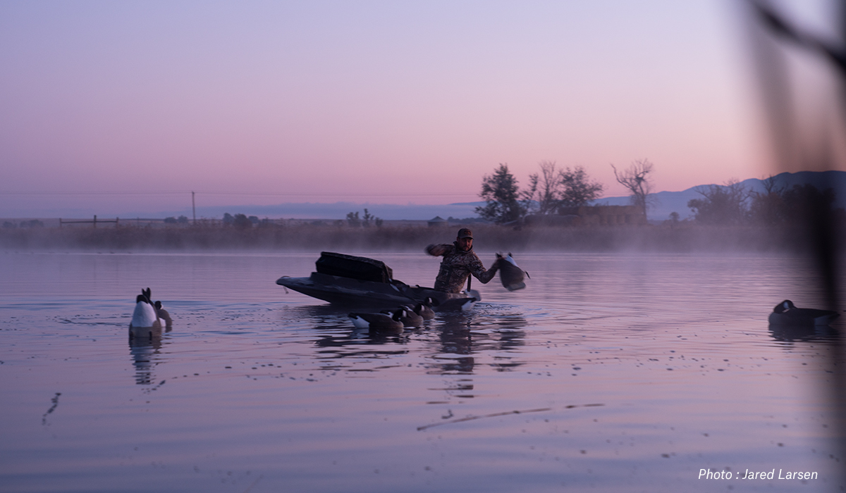 Man hunting geese and setting decoys in a pond at dawn.