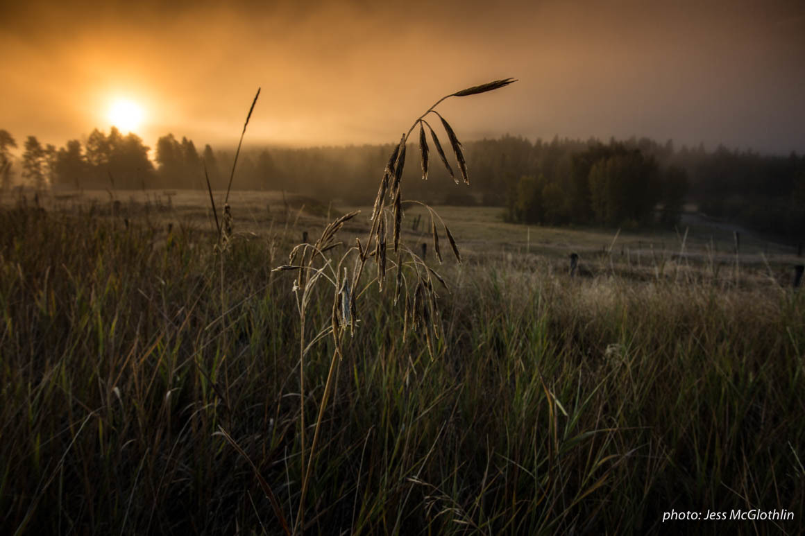 Grass with frost during sunrise over Blackfoot River in Montana.