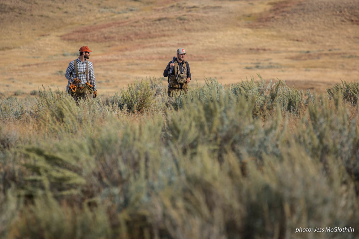 Men walk through a field while upland bird hunting in Montana.