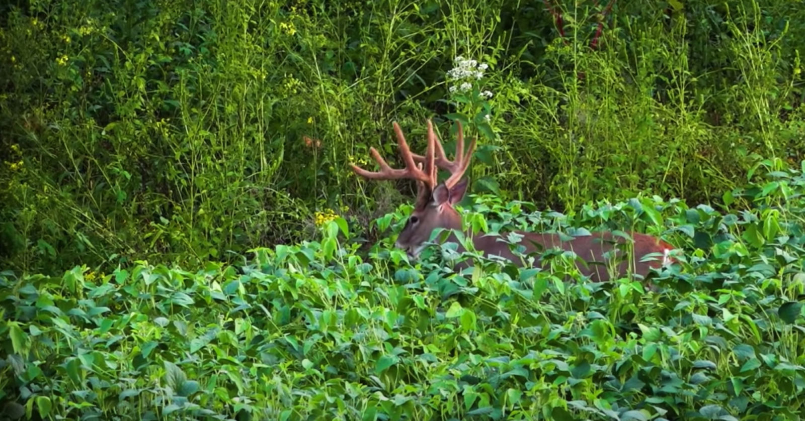 Maximizing your Land's Potential for Better Hunting