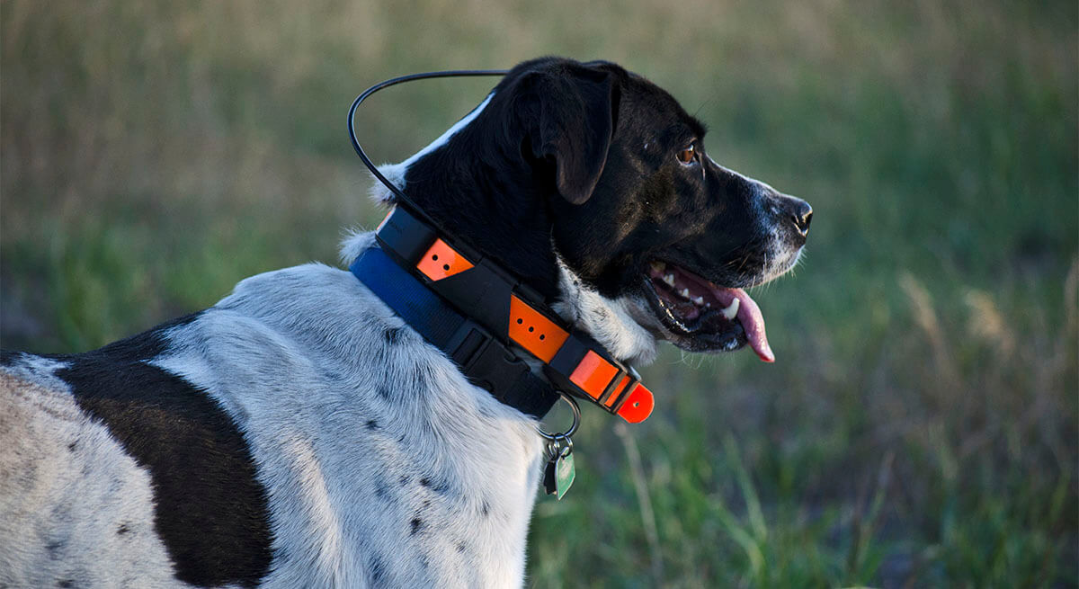 gps hunting dog collar