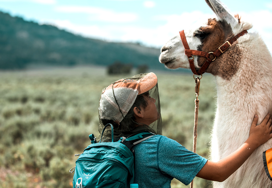 Marcus the Public Lands Llama poses with one of the hikers he helping in Yellowstone National Park.