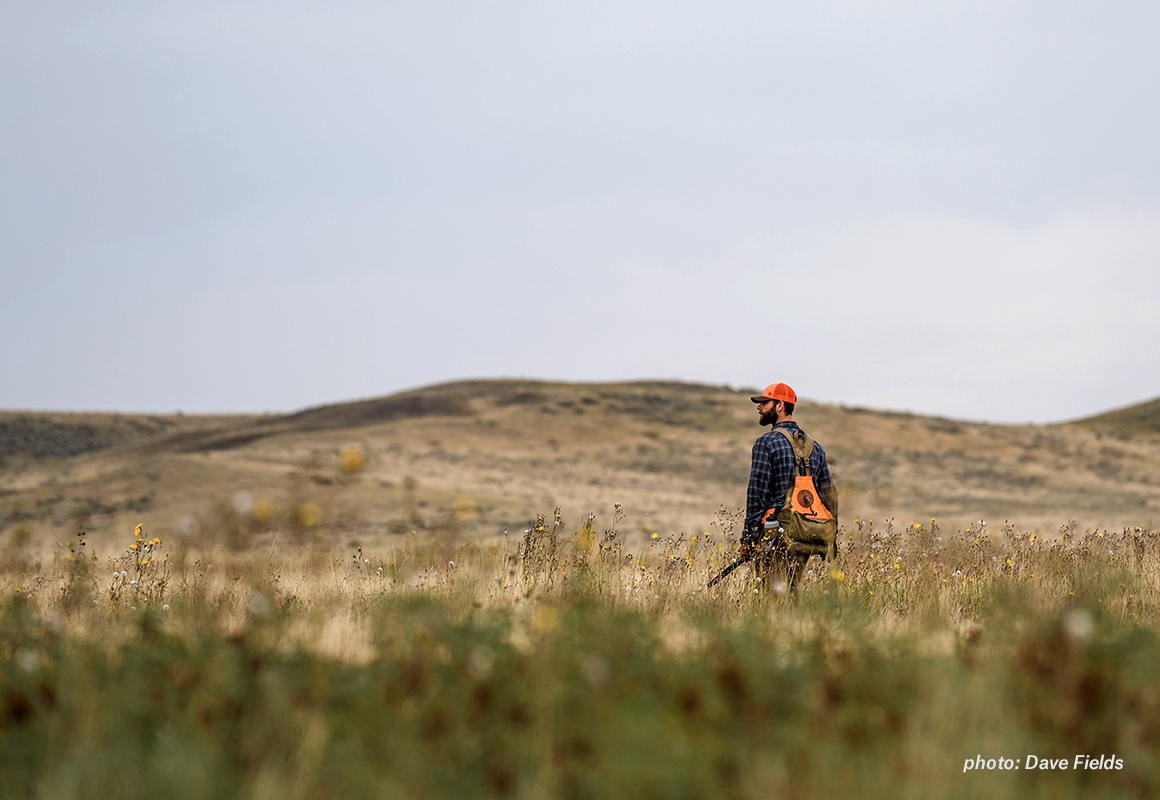 A lone upland Bird hunter walks across the prairie of central Montana in search of sharp-tail grouse.
