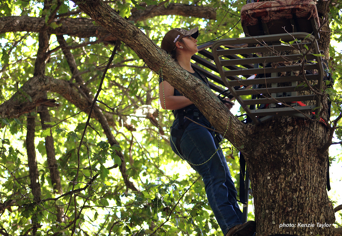 Woman setting up a tree stand for whitetail deer hunting season.
