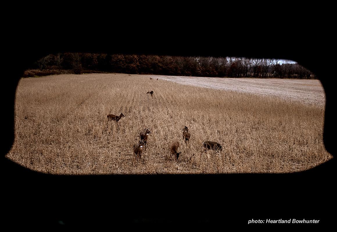 Image of deer in a field, viewed through a blind.