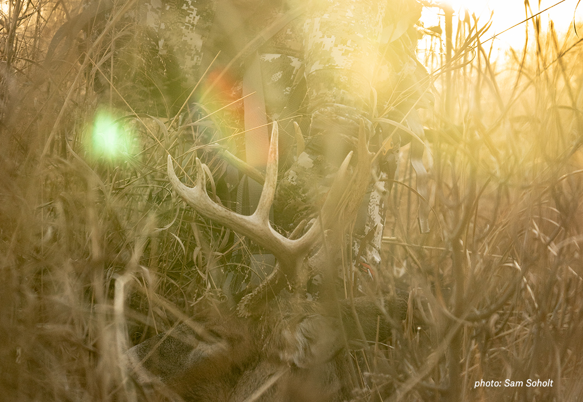 Man dragging deer shot while hunting through tall grass in golden light.